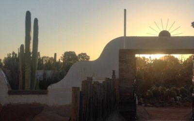 Wanderlust: Behind the Cacti